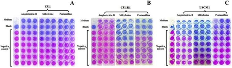 Determination of anti-leishmanial drugs efficacy against Leishmania martiniquensis using a colorimetric assay.